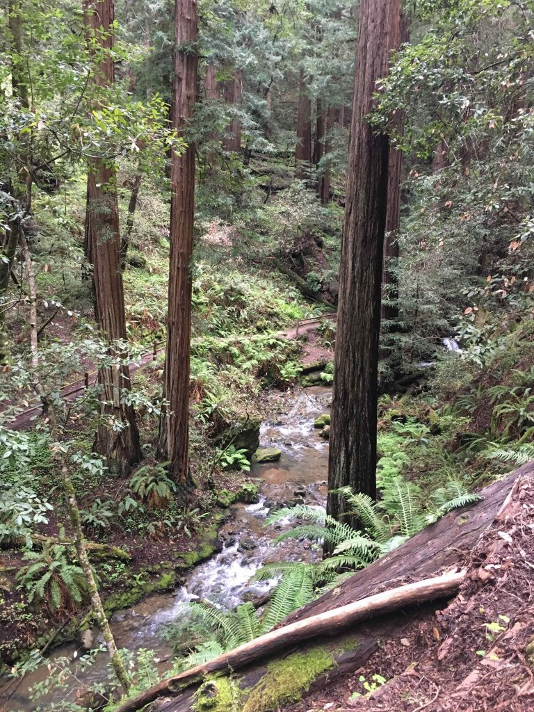 Financial Freedom Book Tour Muir Woods